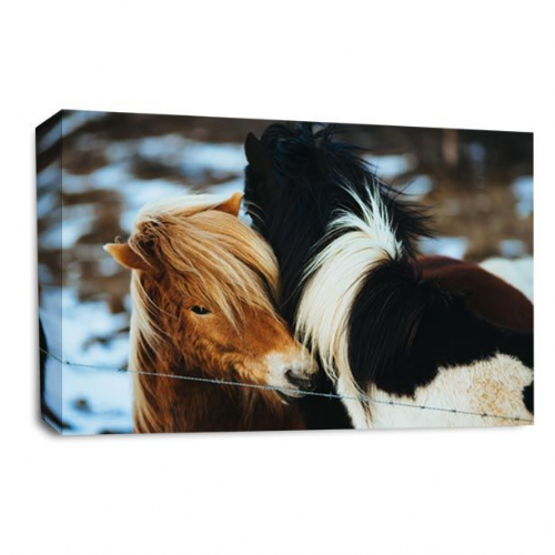 Pony Horse Animal Canvas Wall Art Picture Print